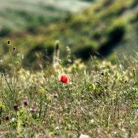 Горные травы :: Глеб Буй