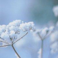 Зимние цветы :: Мария Евстафьева