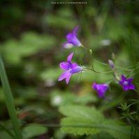 Цветы :: Ruslan © Lysokon