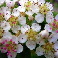 Многоцветье :: bbbbb ggggg