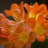 ораньжевое настроение :: Ирина Абовьян