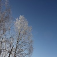 Зимнее кружевье белых берёз-4 :: Наталья Золотых-Сибирская