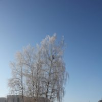 Зимнее кружевье белых берёз-3 :: Наталья Золотых-Сибирская