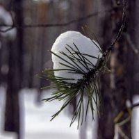 Зима в сосновом бору :: Евгений Русин