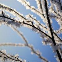 зимнее противостояние :: konstantin tatonkin