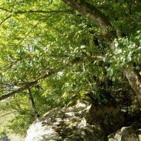 Камни горной реки :: Александр Леонов