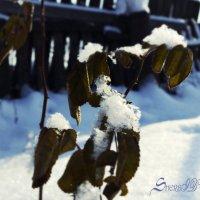Зима :: XDЩерED 1186