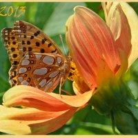 Бабочка на счастье :: Диана Задворкина