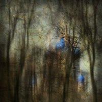 Тернистый путь :: Alexander Asedach