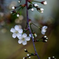 Весна :: Степан Бормотин
