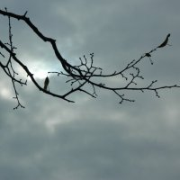 Свинцовое небо :: Lina Liber