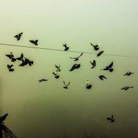 свободный полет :: Валерий Шубкин