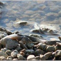 Рыбачка :: Андрей Lyz