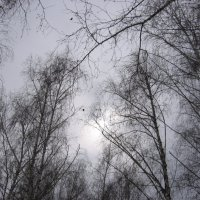 Холод :: Наталья Лесовая