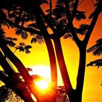 African sunset :: Сания Киришева