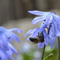 пчелка :: Игорь Яковлев