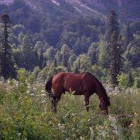 Высоко в горах пасется...конь :: Дарья *******