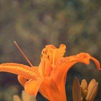 Flower :: Андрей Дыдыкин
