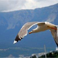 Свободный полёт... :: Андрей Медведев