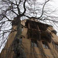 Замок в паутине веток :: Алекс Беc