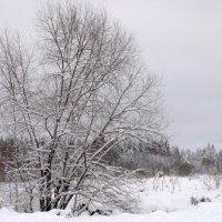 Зимний пейзаж :: Ольга Мазаева