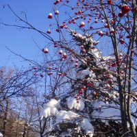Зимние красоты :: Elena Svistova