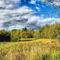 Осень золотая ,краски рассыпает . :: Алла Мещерякова