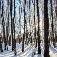 Зимний день :: Константин Кудин