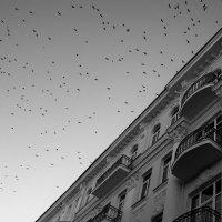 ...черно белое... :: Александр Садовский