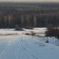 Зимний лес. :: Валерий Дубровин