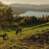 Вечер в высокогорье :: Анастасия Богатова