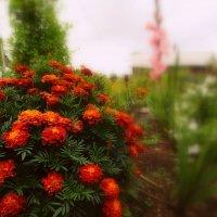 Осенние цветы :: Наталья Аракчеева
