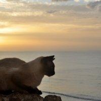 Сегодня , 1 марта , Всемирный кошачий День !!! :: человечик prikolist