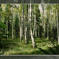 в лесу :: Валерий Коноплев