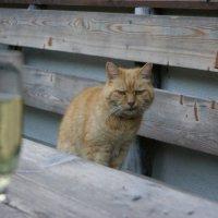 ко Дню кошек! :: Anastasia Ciego
