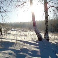 солнечное утро :: Юлия Sun