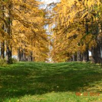 Вперед осень :: Ильнур Муратов