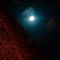 African night :: Сания Киришева