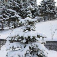 Первый день весны :: Вера Вялкова