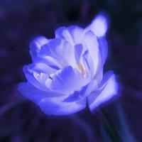 весна :: Марина Попова