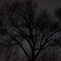 Психоделичное дерево :: Дмитрий Николаев