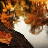Золотая осень :: Юлия Стальнова