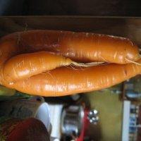 морковка :: нина полянская