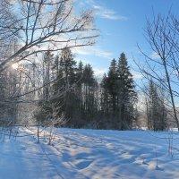 В поисках зимы 1 :: Нина Сигаева