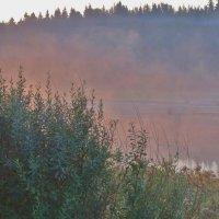 Розовый туман на восходе солнца :: Светлана Лысенко