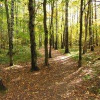 Img_5573 - Солнечный осенний день в лесу :: Андрей Лукьянов