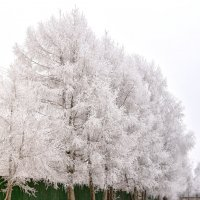Зимнее одеяние... :: Сергей Рыжков