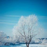 Зимние кружева :: Наталья Шевелева