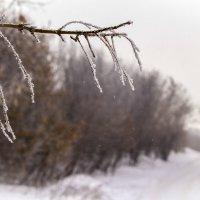 зимняя пора :: Алексей Медведев