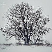 Зимняя имитация смерти. :: Arman